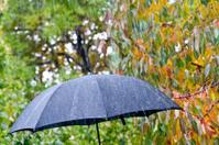 detail of umbrella
