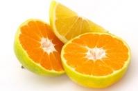 oranges and mandarine