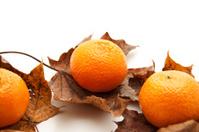 Oranges on leaves
