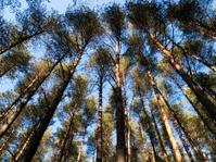 Trees, wide angle