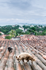 Cats on tile roof