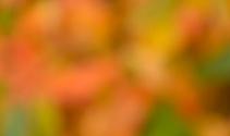 Autumn Colours Background