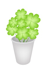 Four Leaf Clovers in A Flower Pot