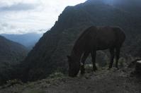 Horse in Nepal