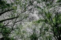 Autumn tree look up background