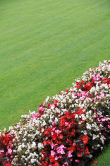 Begonias flower bed in the park