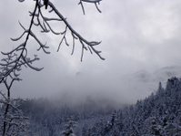 Winter forest in Tatra Mountains