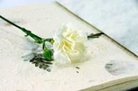 White carnation on Handmade book.