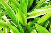 Green tropical leafs