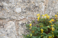 Stone wall with wild flower background