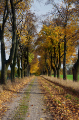 The alley with trees