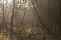 Danish forest