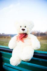 cute teddy bear sitting on the bench