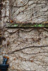 Organic wall, alive