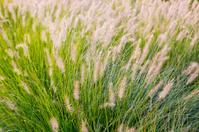 Tall Grass Abstract