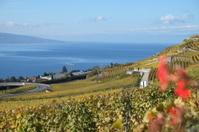 Vineyards over the Lake Geneva