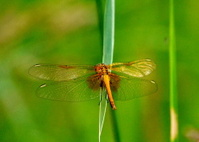 Steepe insect