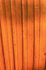 Orange leaves for background