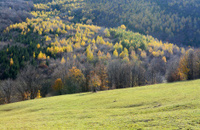 Autumn landscape with color tree