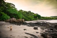 Costa Rican dog in Hermosa, Guanacaste