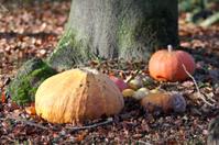 Halloween Forest Pumpkins Tree Autumn