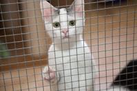 caged kitten