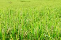 Fields of green.