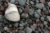 Smooth Seashore Stones