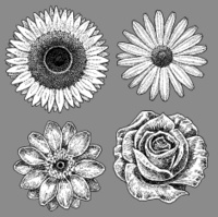 Flowers - Sunflower, Rose, Daisy, Zinnia