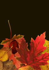 Fall compostion 3