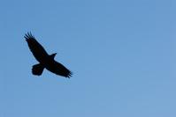 Black Bird and Blue Sky