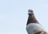 bird looking at camera with indifferent expression