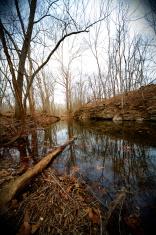 river bottom swamp scene
