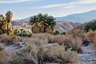 Thousand Palms Oasis Near Palm Desert California