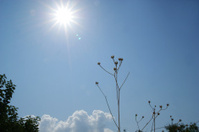 Sunbeam