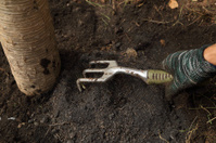 hand with small gardening fork working in the garden