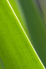 Angle micro world