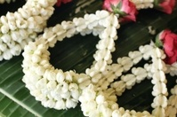 white jasmine garland