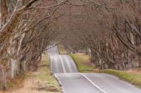 The beech avenue