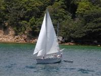 Sail Boats 802