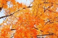Tree Limbs