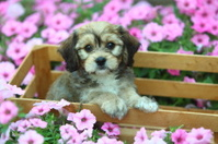 Fluffy Puppy in Wooden Crate
