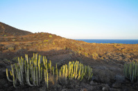 Succulent Plant Cactus on the Dry Desert