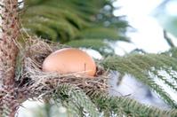 Egg in bird nest on tree.