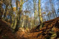Late autumn danish forest