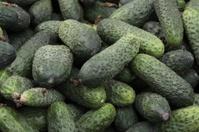 green,fresh cucumbers