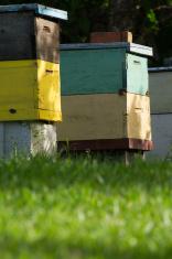 Man made honey bee hives