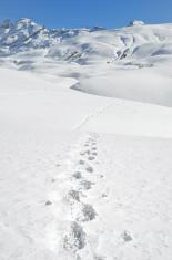 Footprints on the snow. Switzerland