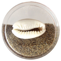 Sea shell and sand