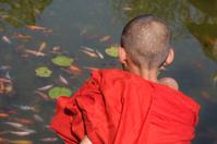 Myanmar: Novice Monk Watches Goldfish